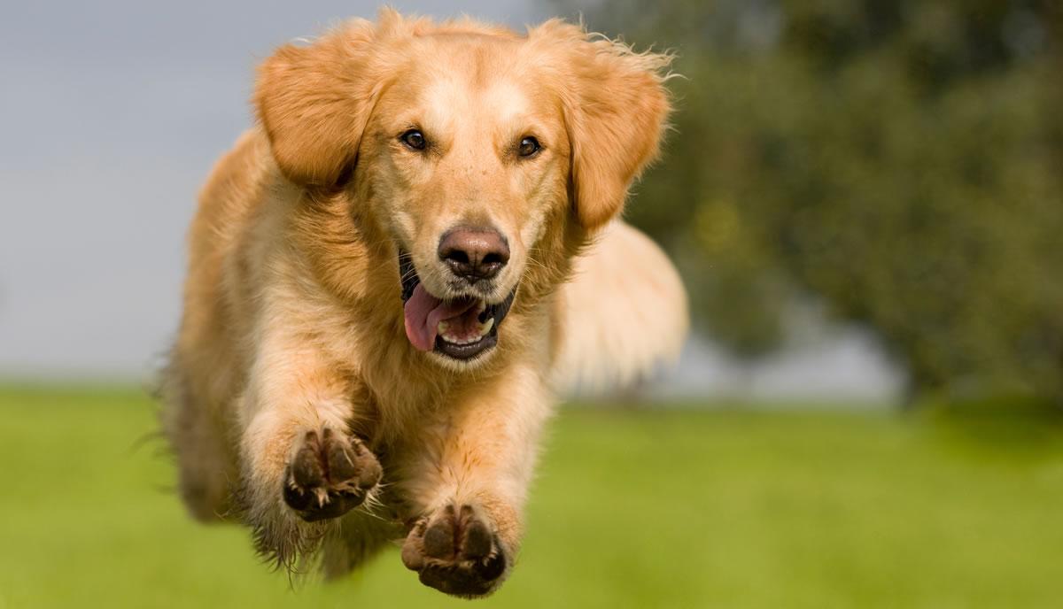 Mercado PET cresce 7,5% superando as expectativas